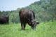 新規繁殖和牛経営入門講座